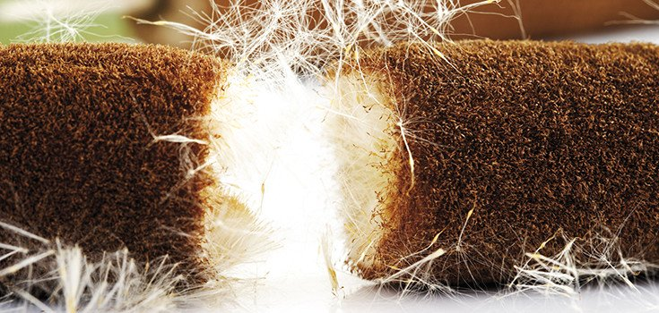 cattail-plant-herb-735-350