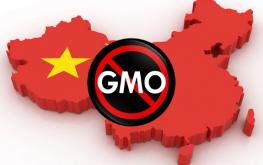 China GMO