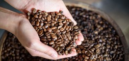 Coffee Apocalypse Coming? Demand and Brazilian Drought Point to 'Yes'
