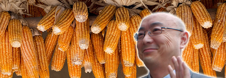 corn-crop-cobs-mo-chinese-seeds-2-735-250