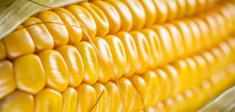 China's Silence Over GMOs Sends Biotech Company to U.S.