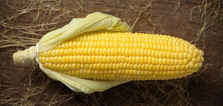 corn-crop-gmo-735-350
