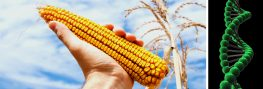 Monsanto Gets the First CRISPR License to Modify Crops