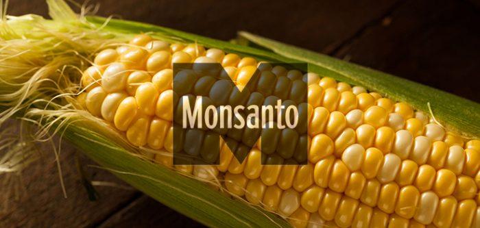 corn Monsanto
