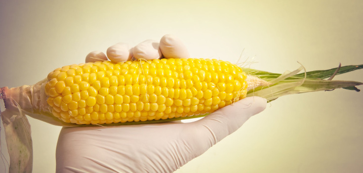 corn_approved_735_350