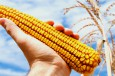 VIDEO: HBO Series Highlights Problems with Genetically Modified Crops
