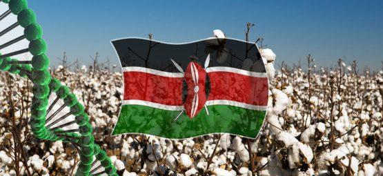 Kenya cotton crop