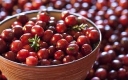 Cranberries Effective Against Urinary Tract Infections