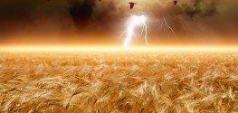 Report: 3 Reasons Why GMOs Won't Feed the World