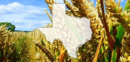 Texas Pushes for GMO Labeling with Introduction of New Bill
