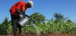 sugarcane in Africa