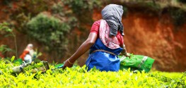 India Halts GMO Trials After Activist Campaign