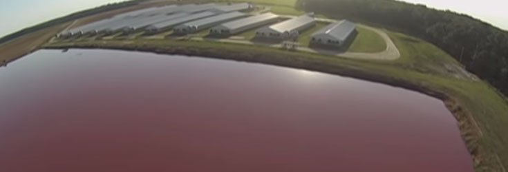 factory farm drone lake Drone Video Exposes Feces Lake Inside Mega US Factory Farm
