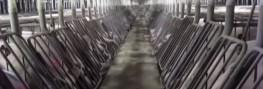 Drone Video Exposes 'Feces Lake' Inside Mega US Factory Farm