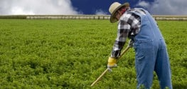 EPA Placing Blame on Farmers for Monsanto's Cancer-Causing GMO Crops