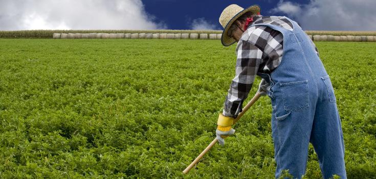 farm_crops_735_350