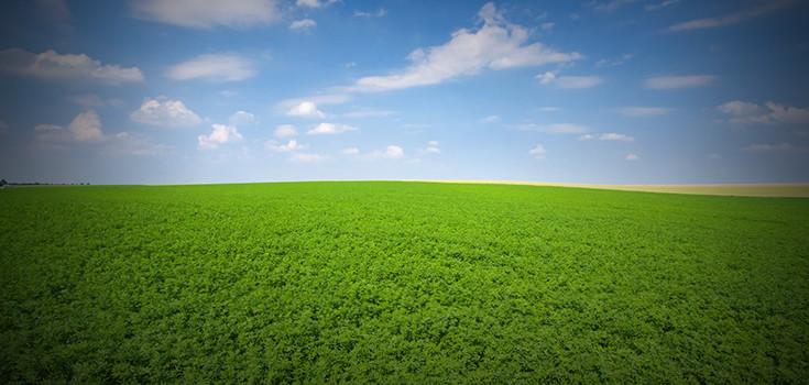 field-alfalfa-lucern-735-350-2