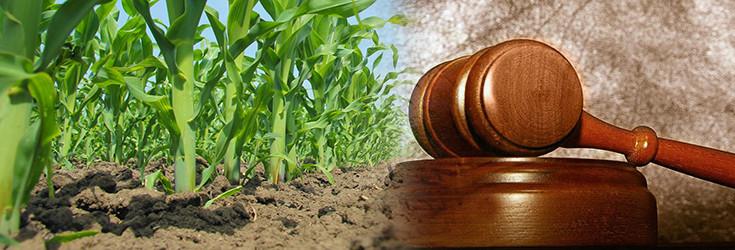 field-corn-sky-court-735-250