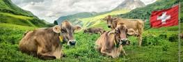 Switzerland Fed Council Extends GM Moratorium Until 2021