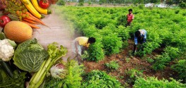 State in India Goes 100% Organic, Protects 75,000 Hectares of Land from GMOs