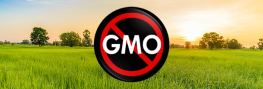 Venezuela Rejects the Production, Distribution, and Importation of GM Seeds