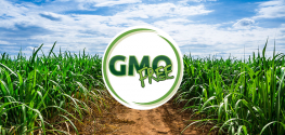 Sugar Companies Face 'Serious Roadblocks' Due to Demand for NON-GMO