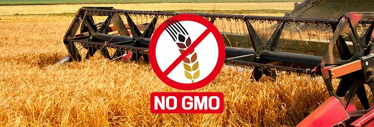 field-wheat-grain-gmo-no-735-250