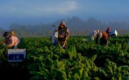 Organic Food Beats Conventional Every Time, Award Winners Agree