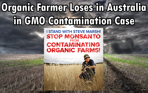 Steve Marsh GMO contamination