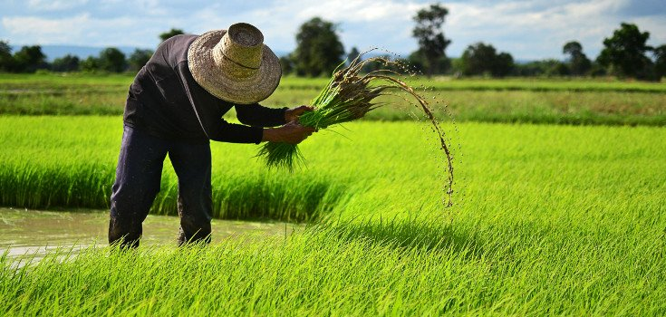 field_farm_crops_735_350