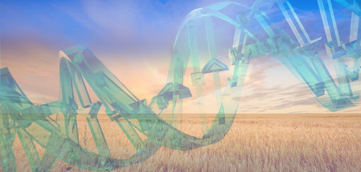 field_wheat_dna_735_350