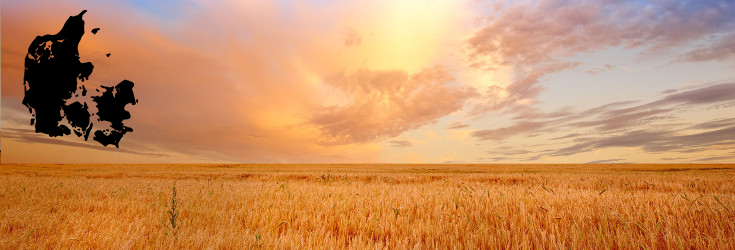 field_wheat_sun_735_250