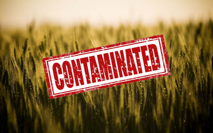 contaminated crops