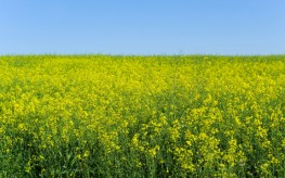 Biotech Quick Fix for Superweeds Could Lead to 'Super Superweeds'