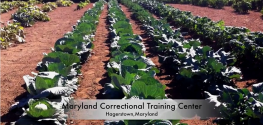Video: Inmates at Correctional Facility Grow 5 Tons of Food for Less Fortunate