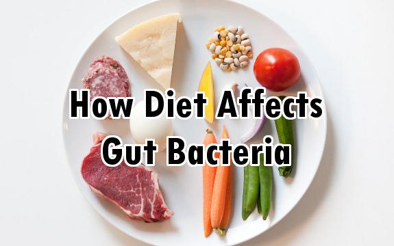 food gut bacteria