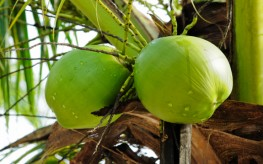Lower Your Blood Pressure with Coconut Water