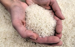 Radiation in Rice Found in Japan