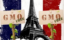 France gmos