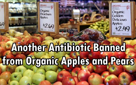 apples antibiotics