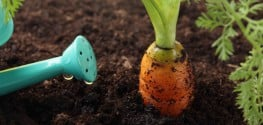 5 Surprising Ways to Use Recycled 'Garbage' for a Better Organic Garden
