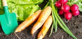 How to Grow Your Own Organic Food with 'Additive Intercropping'