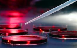 Genetically Modified Lab Monkeys Invoke Debate