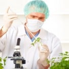 Scientists Create Genetically Modified Plants to Produce Pharmaceutical Drugs