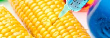 Monsanto's GMO Bt Toxins Found in 93% of Pregnant Women