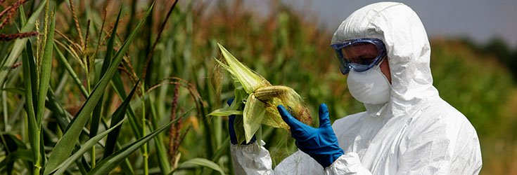 gmo-crops-pesticides-toxic-735-250
