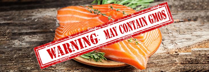 gmo-food-salmon-fish-735-255