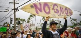 Maui Inches Closer to Beating Monsanto over New GMO Moratorium