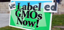 8 States Support Vermont in Fight Against Monsanto and GMOs