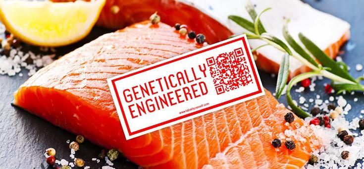 gmo-salmon-ge-735-